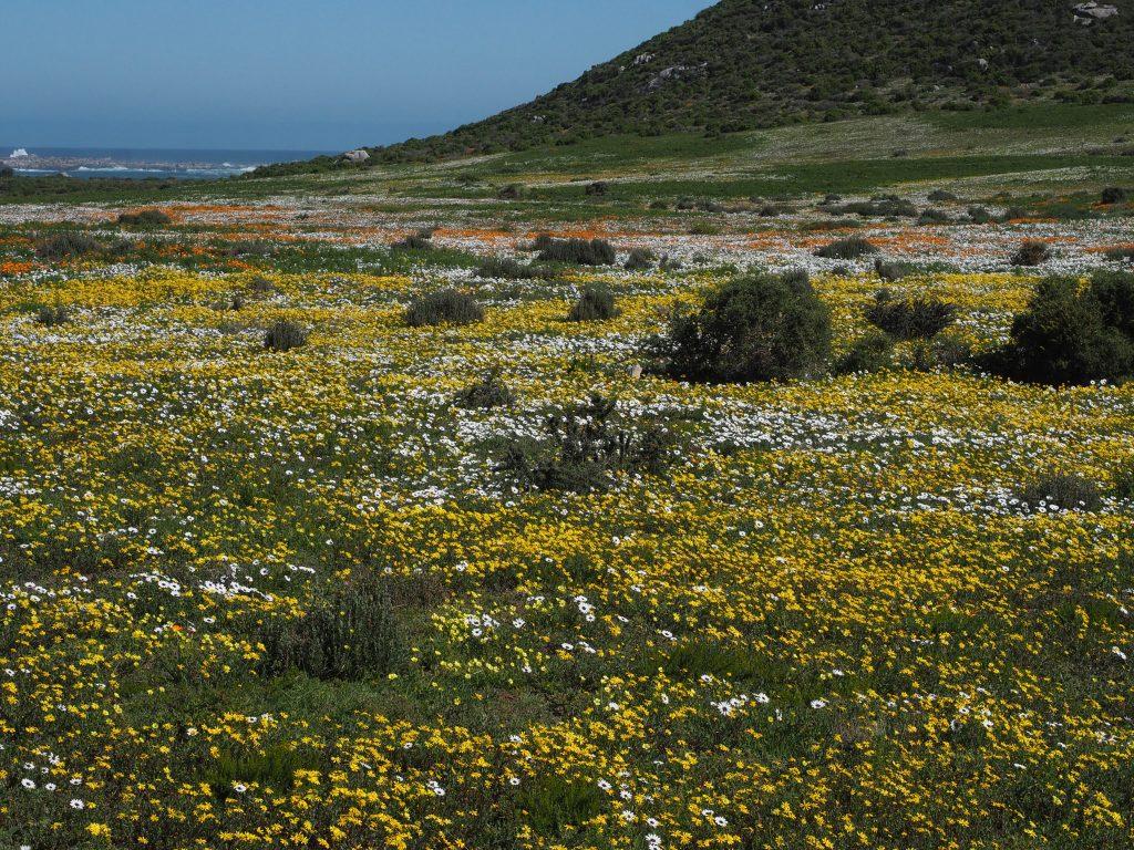 flowers prosperous western coast