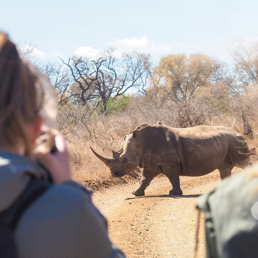walking safari white rhino
