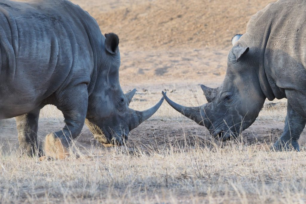 white rino safari south africa