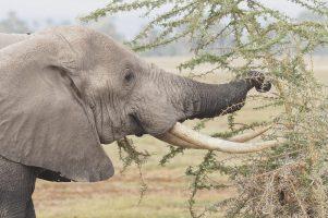 big five elephant safari