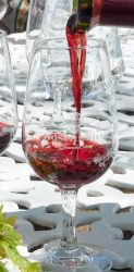 red wine south africa pinotage
